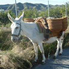 Donkey at Fit Camp Spain